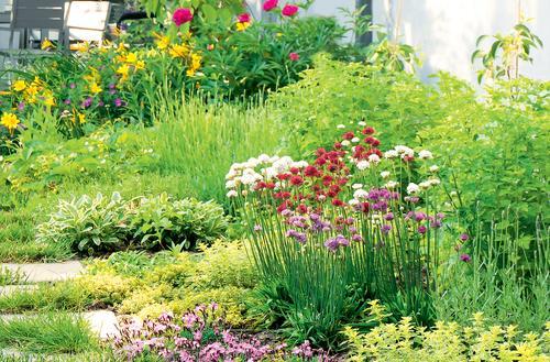 Ogród na ziołowo